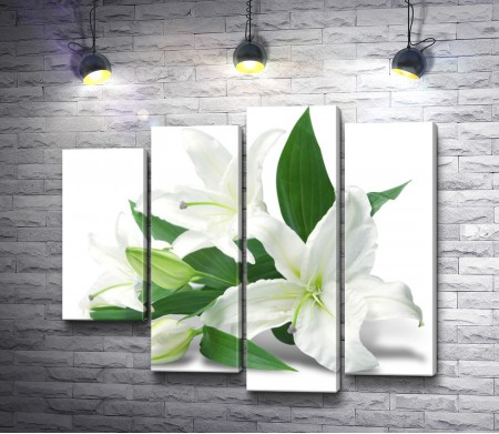 Белые лилии на белом фоне