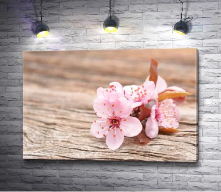 Цветы вишни на деревянном столе