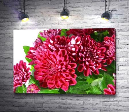 Букет ярко-розовых хризантем