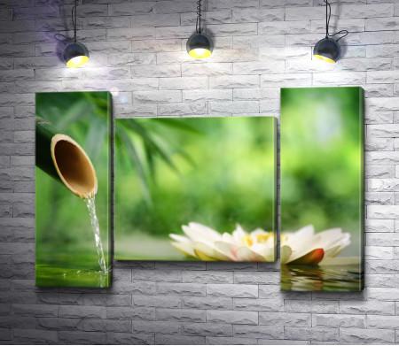 Лотос и бамбук с прозрачной водой