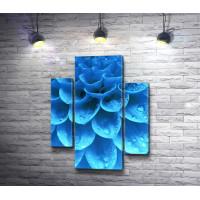 Лепестки голубой хризантемы с капельками воды