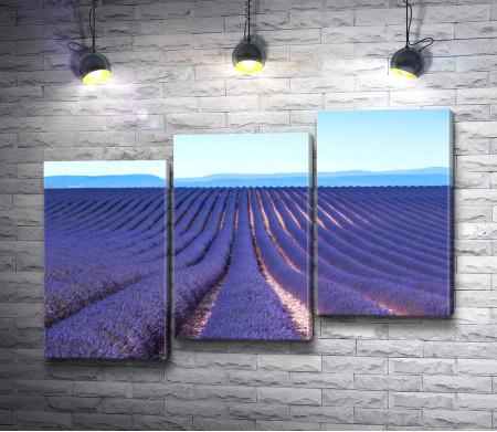 Пейзаж с лавандовым полем в Провансе