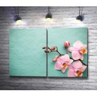 Сиреневая орхидея на мятном фоне