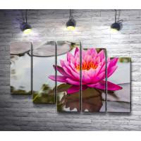 Розовый цветок лотоса на воде