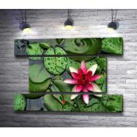 Цветок лотоса на зеленых листьях