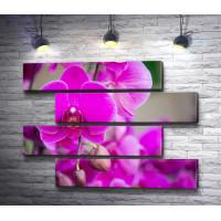 Экзотичные фиолетовые орхидеи