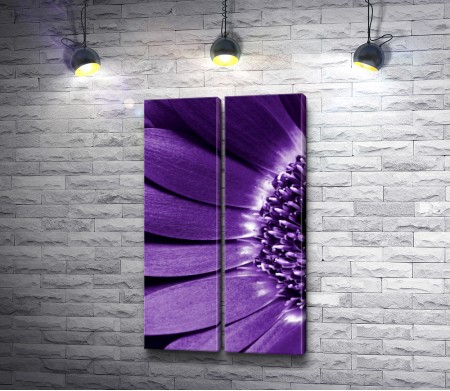 Сердце фиолетовой герберы
