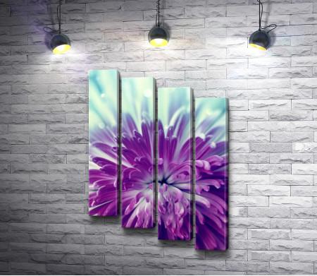 Нежная фиолетовая хризантема