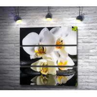 Белоснежные орхидеи на черных камнях спа