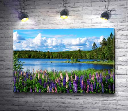 Красивый скандинавский летний пейзаж с люпинами и озером