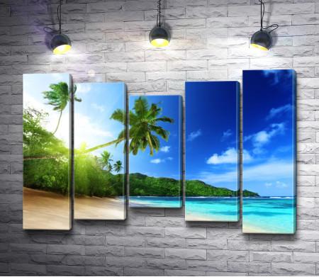 Побережье океана в тропиках с пальмами