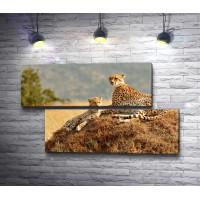Два гордых леопарда,  Сафари