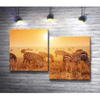 Зебры на пастбище, Саванна