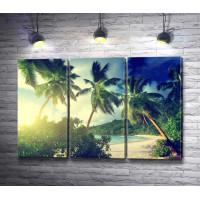 Пальмы в лучах солнца на тропическом берегу