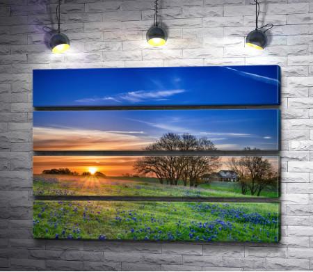 Поляна весенне-голубых цветов на рассвете
