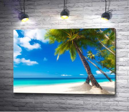 Пальмы на белоснежном побережье лазурного океана