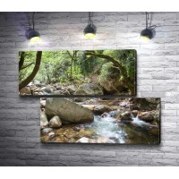 Река и камни в лесной чаще