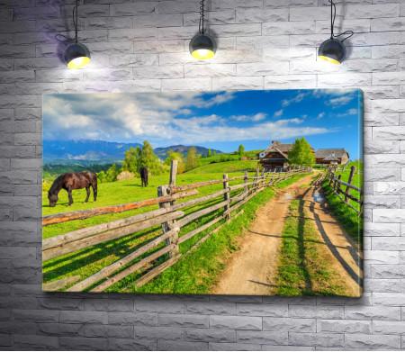 Лошади на деревенском пастбище