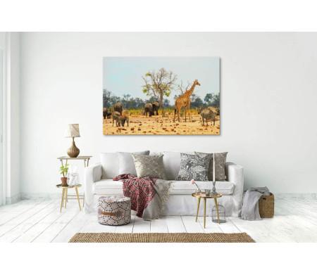 Зебры, слоны и жираф в парке в Зимбабве