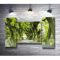 Красивая аллея с зелеными деревьями