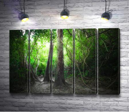 Деревья в непроходимых тропических джунглях