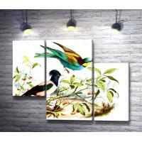 Красочные птицы на ветке