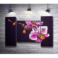 Сиреневые орхидеи на черном фоне