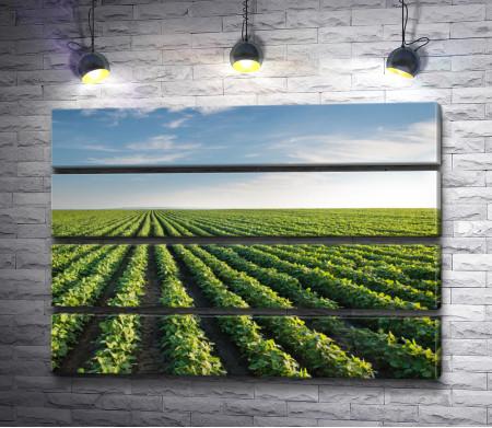 Зеленые виноградники