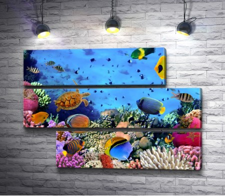 Красочный океан