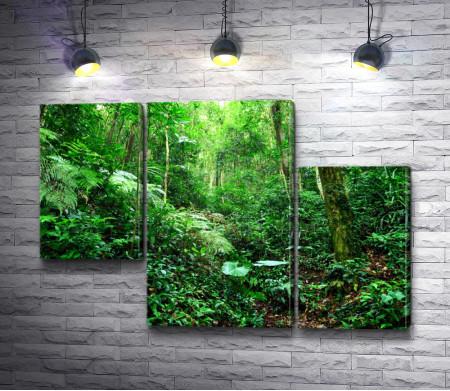 Нетронутые джунгли