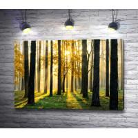 Лучи солнца освещают лес