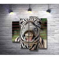 Улыбка зебры