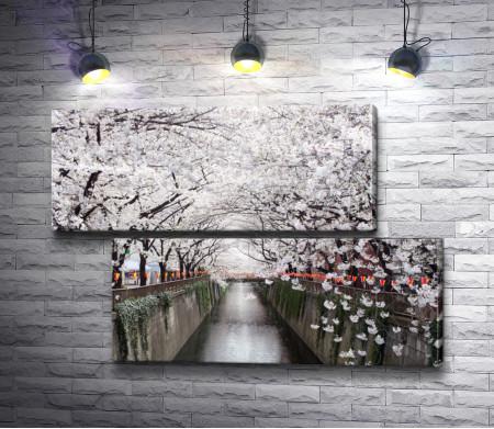 Ароматное цветение сакуры возле воды