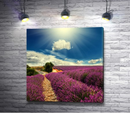 Лавандовое поле и прекрасное небо