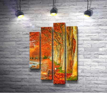 Деревья покрылись яркими красками