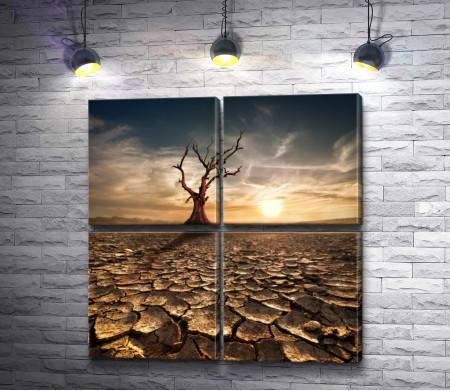 Беспощадная засуха