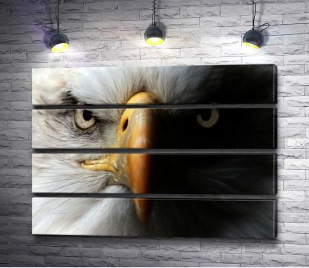 Хищный взгляд орла