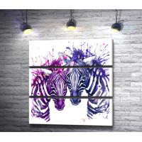 Две зебры