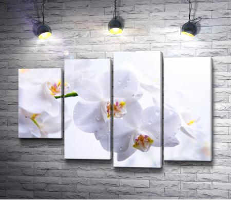 Ветка белых орхидей