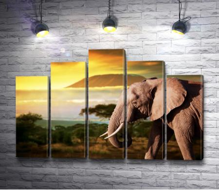 Слон и закат в саванне