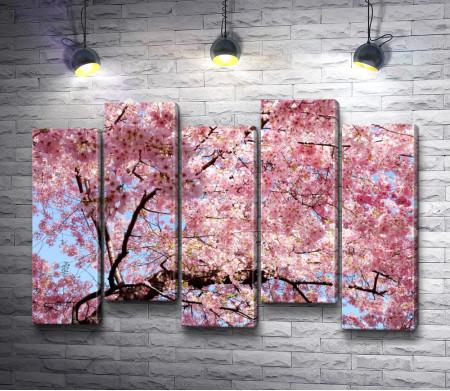 Цветущее весеннее дерево