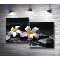 Две белые орхидеи на камнях спа