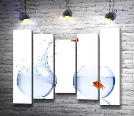 Рыбка перепрыгивает из одного аквариума в другой