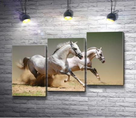 Две белые лошади скачут по степи
