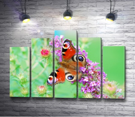 Невероятная бабочка сидит на цветке