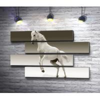 Грациозная белая лошадь