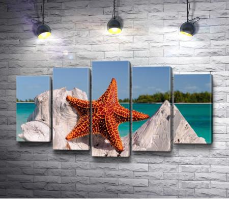 Морская звезда на фоне тропического побережья