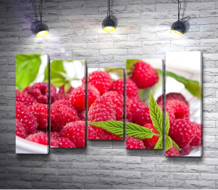 Свежие ягоды малины