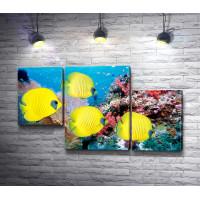 Желтые тропические рыбки