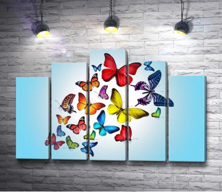 Разноцветные бабочки